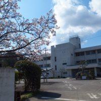 まなび正門_桜